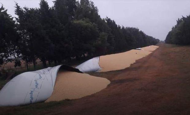 Robo en Santa Fe: le rompieron silo bolsas y cargaron dos camiones con soja