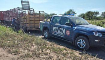 Robo de ganado: encontraron 78 animales en el campo del vecino