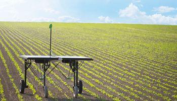 Protección de cultivos: Syngenta apuesta a la inteligencia artificial para desarrollar productos sostenibles