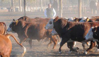 Se recupera el rodeo nacional, pero no en carne