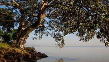 Árboles y agua, un romance necesario