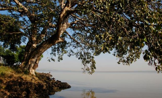 La producción forestal con especies de rápido crecimiento puede implicar un impacto negativo sobre los recursos hídricos locales.
