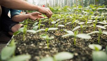 Sustainable Agtech Challenge: convocan a startups innovadoras