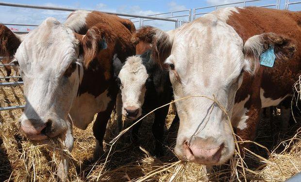 Los 6 números del momento que describen la actualidad de la ganadería