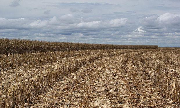 Buenos Aires impulsa rotación agrícola