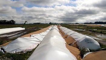 Rompieron 40 silobolsas con 9000 toneladas de soja