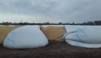 Más de 15 en pocos días: denuncian nuevas roturas de silo bolsa en Santa Fe y Córdoba