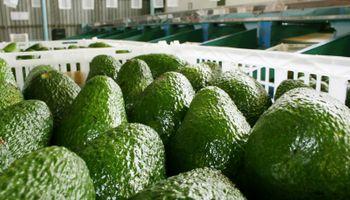 Palta, la fruta influencer en las comidas de los argentinos