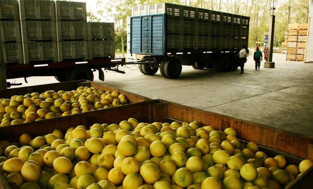 La producción orgánica en nuestro país cuenta con 3,2 M de hectáreas certificadas, lo que nos ubica en el segundo lugar del ranking mundial.
