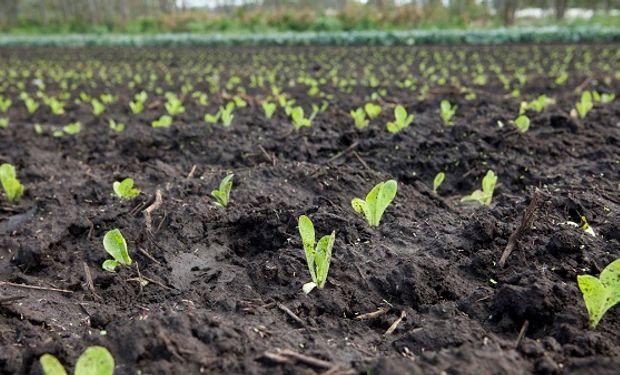 Mejores alimentos: capacitación sobre las buenas prácticas agrícolas obligatorias en la producción de frutas y hortalizas.