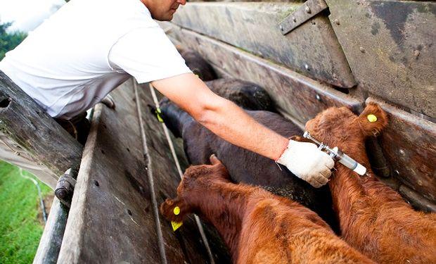 Prorrogan la recertificación de establecimientos libres de enfermedades bovinas, porcina y ovinas
