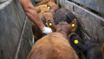 COVID-19: promueven investigaciones con un antiparasitario de amplio uso en bovinos