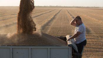 Rusia planea aplicar un mecanismo permanente para la exportación de trigo