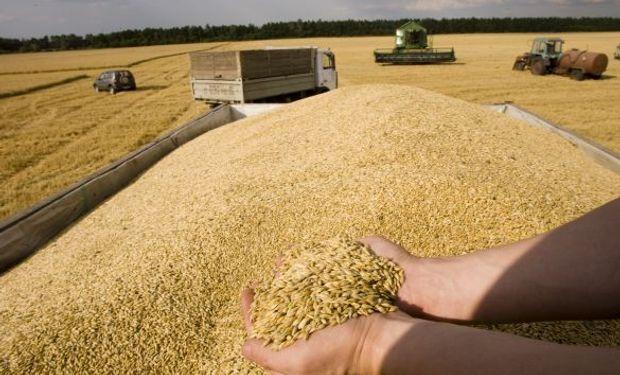 La medida adoptada se traducirá en la exportación de hasta un millón de toneladas de trigo adicionales.