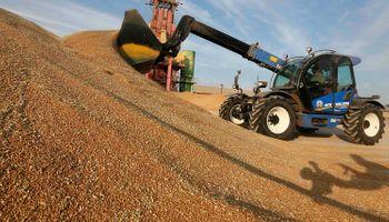 Rusia confirmó que aplicará impuestos a la exportación de trigo