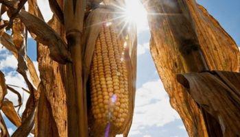 DowDuPont lanzó una nueva marca global de semillas