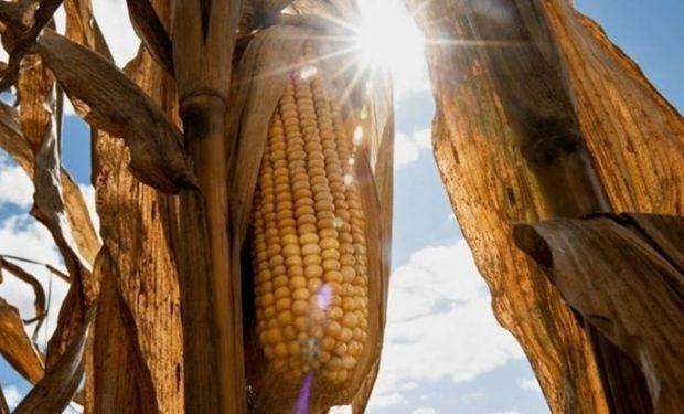 Las semillas Brevant estarán disponibles en varios cultivos, incluyendo maíz, soja, girasol y sorgo en Argentina.