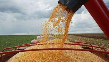"""Fuerte recorte para la """"safrinha"""" de maíz en Brasil"""