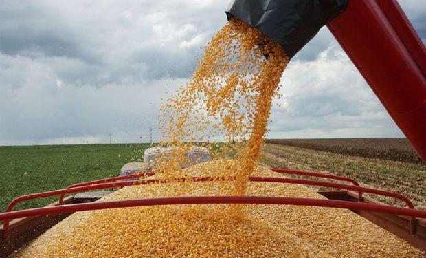 """La firma FC Stone redujo de 56,56 a 49,84 millones de toneladas su cálculo para la """"safrinha"""" de maíz."""