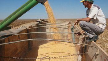 Maíz en Brasil: gana ritmo la cosecha de la safrinha y se esperan 108,4 millones de toneladas