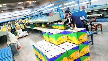 Caen hasta 8,2% las acciones de la principal exportadora de limones de nuestro país