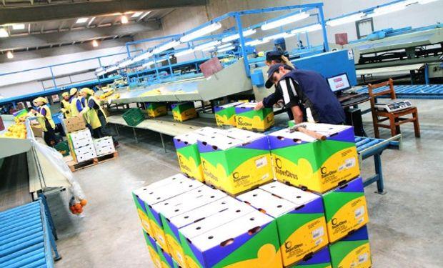 Acciones de San Miguel se hunden un 8,2% tras decisión de EEUU de trabar el ingreso de limones argentinos.