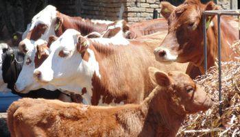 Argentina y China avanzan en materia de sanidad animal