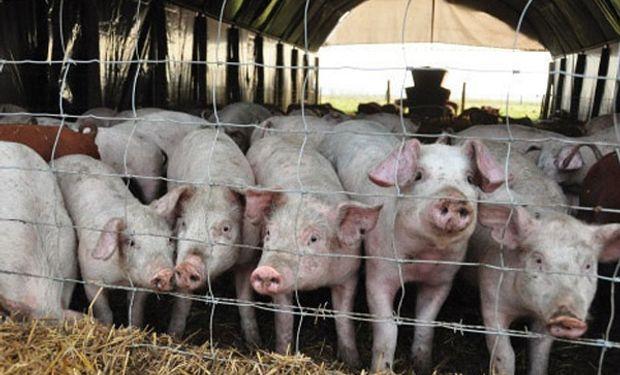 El sector porcino responde a las críticas ambientales y pone condiciones para la inversión de China