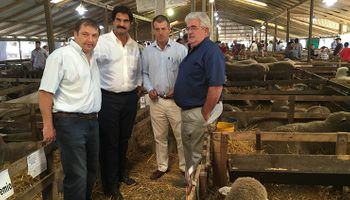Sarquís afirmó que la carne ovina bonaerense es de excelente calidad
