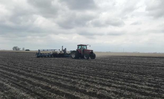 Hoy a las 17 horas de Argentina se presentará el Estado de Cultivos en Estados Unidos, que podría impactar sobre las cotizaciones.
