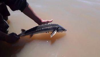 Sorpresa en Santa Fe: apareció un pez de origen jurásico