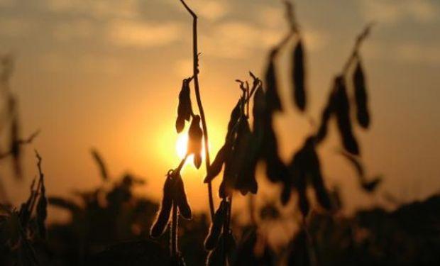Ayer el USDA reportó exportaciones semanales de poroto de soja por 1,5 mill.tt., bastante por encima de lo esperado por los analistas.