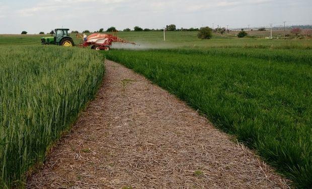 Casos regionales de trigo y cebada en la última campaña.