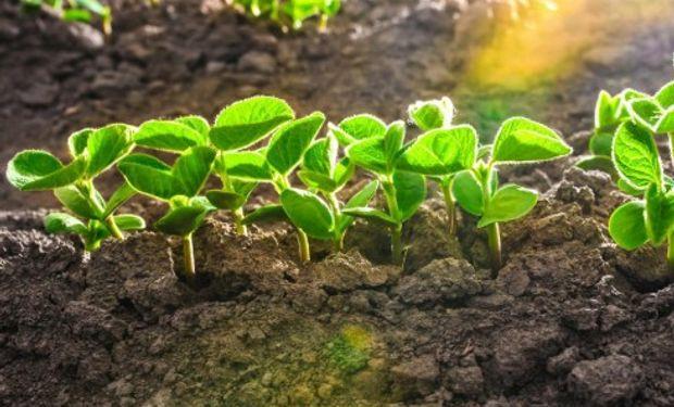 La caída en la condición buena a excelente de los cultivos de soja en Estados Unidos brindó impulso a los precios.