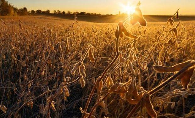 Pronósticos de clima más seco para los próximos días en el Medio Oeste de EE.UU. brindaron soporte adicional a los precios de la soja y el maíz.