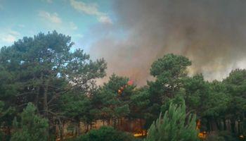 Un incendio arrasó con 8 hectáreas de bosques en Villa Gesell