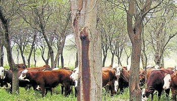 Ganaderos gestionan cambios en la normativa sobre bosque nativo