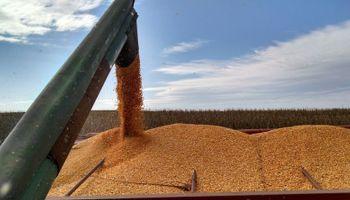 Canje agropecuario: cuáles son los principales beneficios en materia impositiva