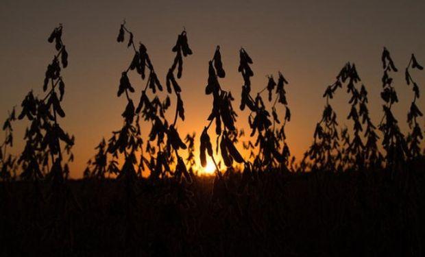 Hoy la CONAB en Brasil incrementó la producción estimada de soja para este país a 118,98 millones de toneladas.