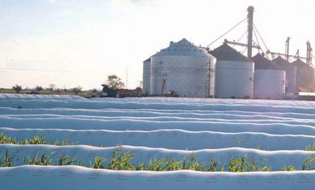 Por el silo bolsa, precios de la soja no varían tanto durante el año