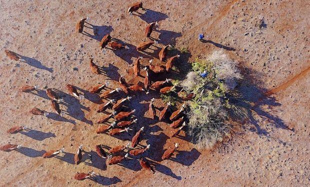 Granjero se para sobre un árbol mientras corta ramas para alimentar a su ganado. Fuente: Reuters - Crédito: David Gray.