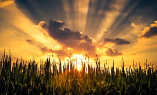 El maíz, el más demandado.