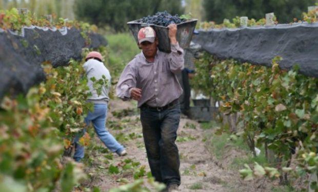 Régimen Agrario: Obreros de viñas.