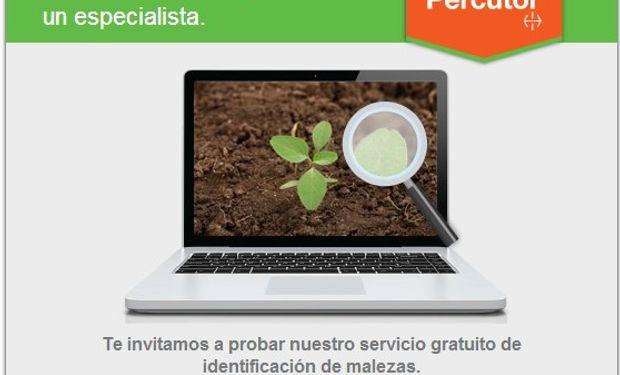Bayer presenta el novedoso sitio web de  su herbicida Percutor