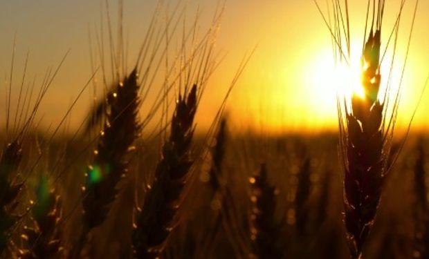 El hecho es que los principales países exportadores se ven afectados por condiciones secas que limitan la exportación.
