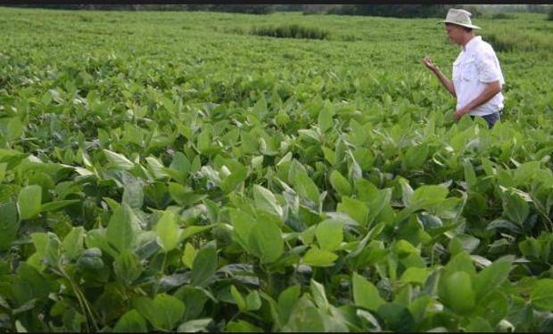 Falta de lluvias seguirá mermando el rendimiento de soja en EEUU