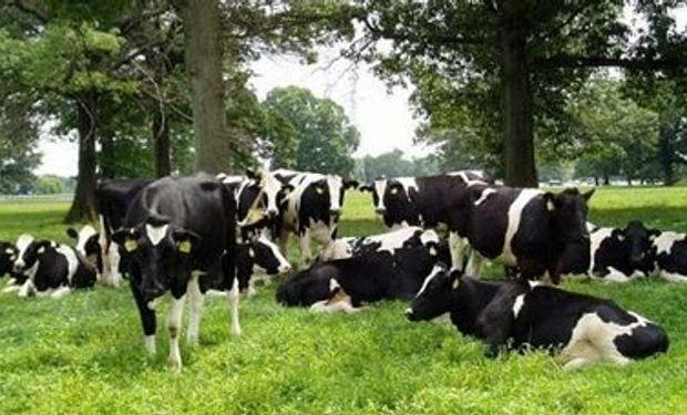 Producción de carne Argentina sube 15% interanual