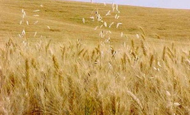 Cosecha de granos de Ucrania podría alcanzar récord