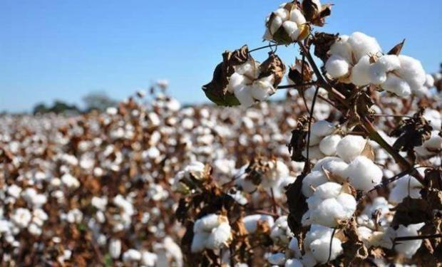 INASE notifica y sanciona nuevas irregularidades en algodón.