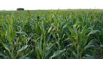 Informa eleva pronóstico de siembra de maíz en EEUU y reduce el de soja
